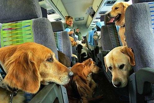 відпочинок з тваринами в Затоці фото