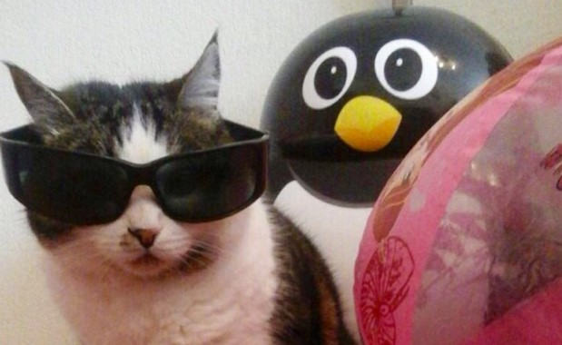 кіт в окулярах збирається на море фото